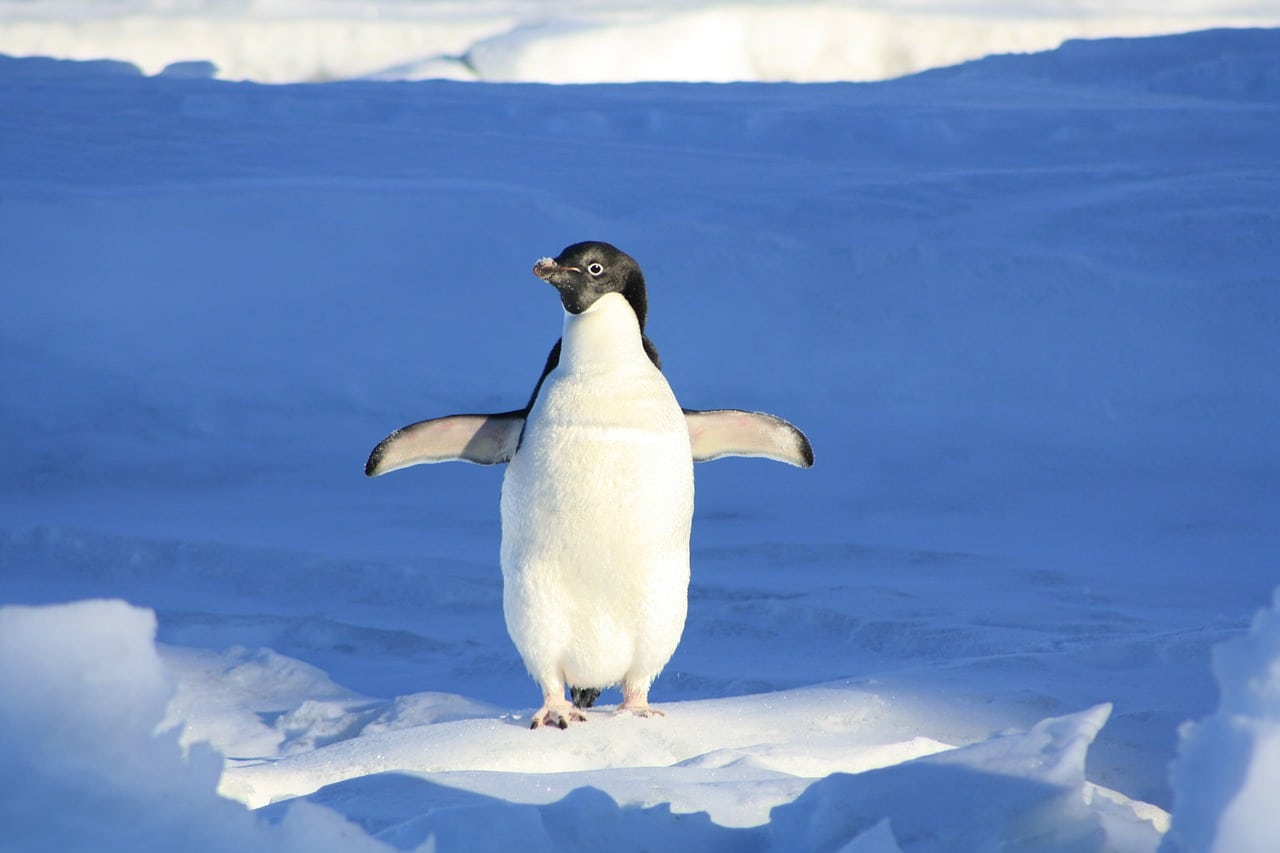 Update Google Penguin 4.0
